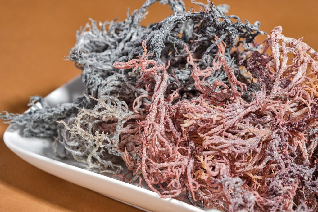 how to store sea moss