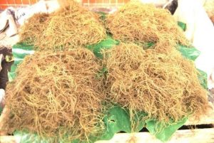 real wildcrafted vs fake farmed sea moss